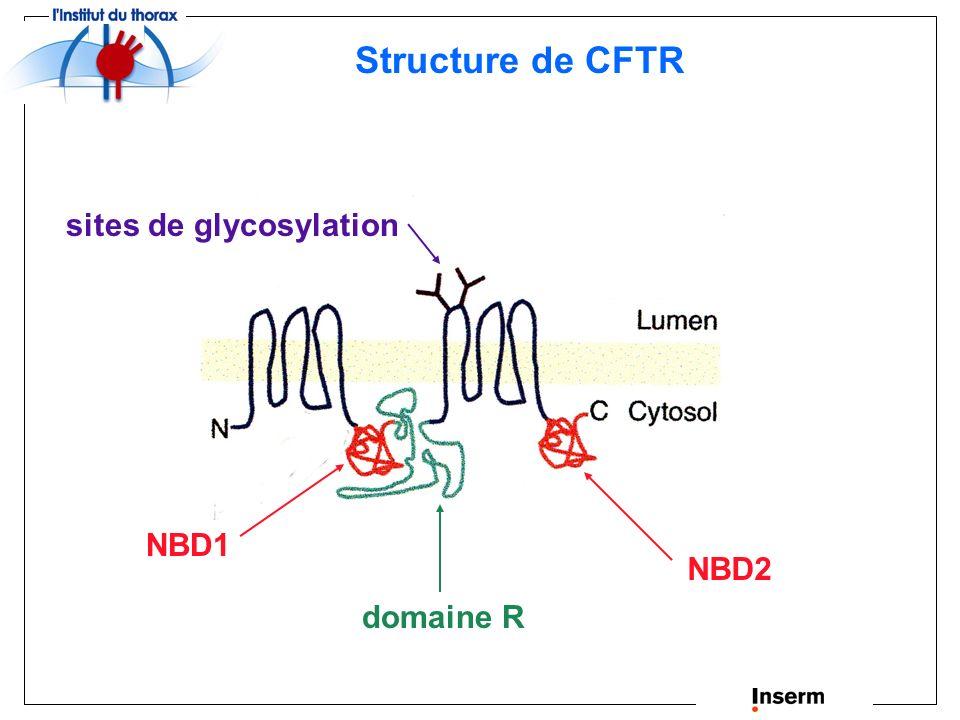 Structure de CFTR sites de glycosylation NBD1 NBD2 domaine R