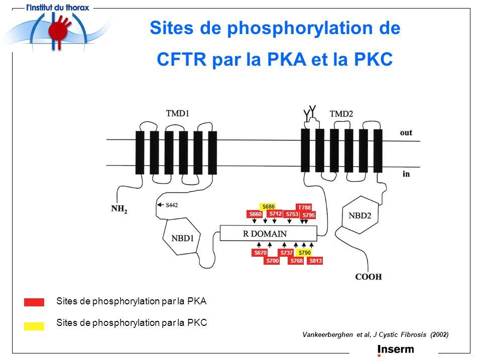 Sites de phosphorylation de CFTR par la PKA et la PKC