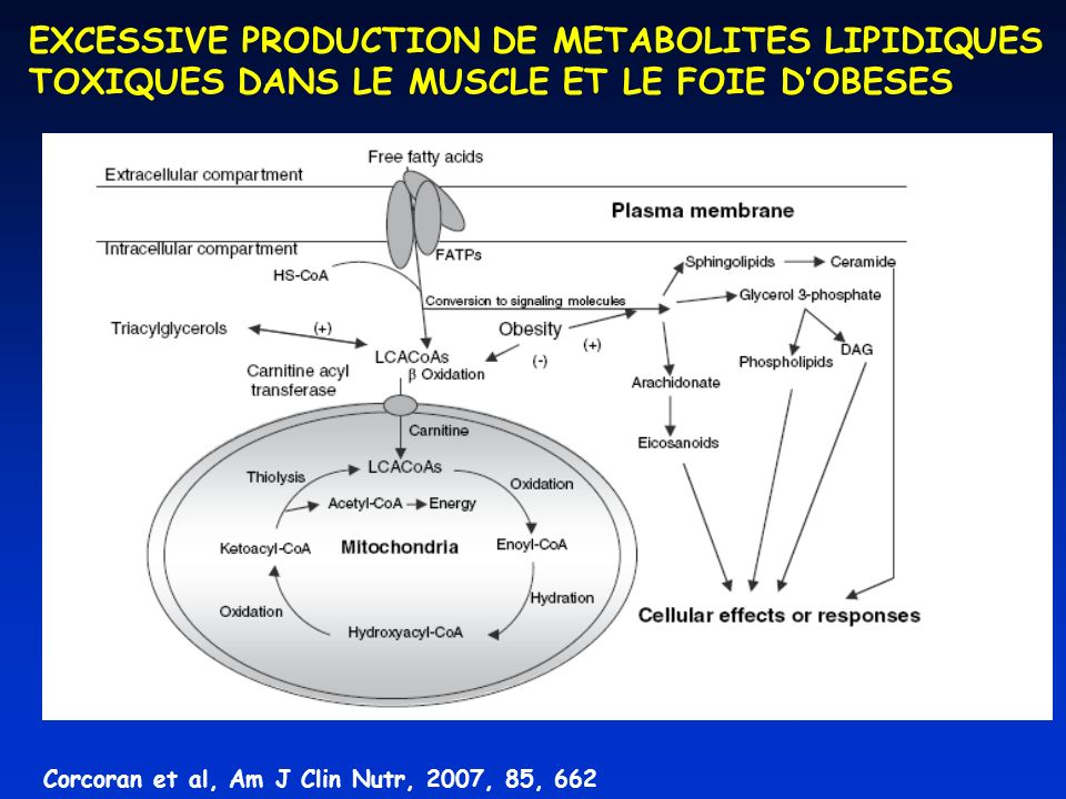 EXCESSIVE PRODUCTION DE METABOLITES LIPIDIQUES