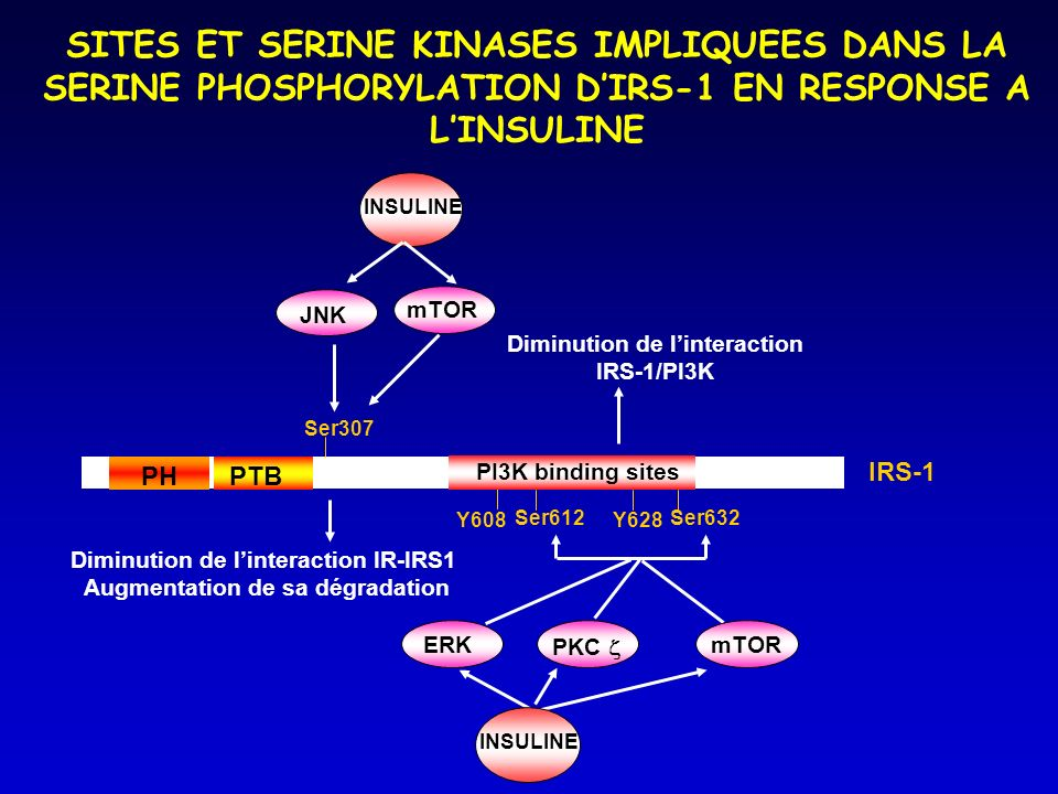 SITES ET SERINE KINASES IMPLIQUEES DANS LA SERINE PHOSPHORYLATION D'IRS-1 EN RESPONSE A L'INSULINE