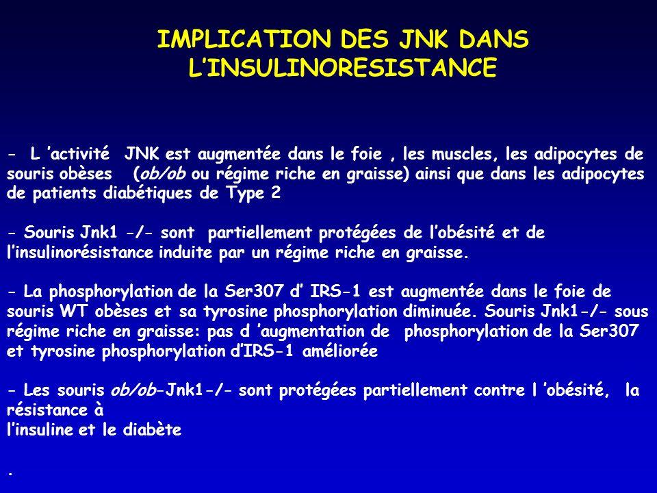 IMPLICATION DES JNK DANS L'INSULINORESISTANCE
