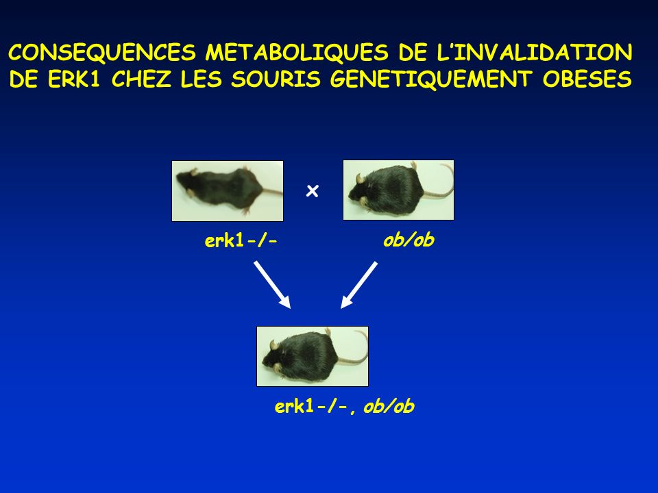 CONSEQUENCES METABOLIQUES DE L'INVALIDATION
