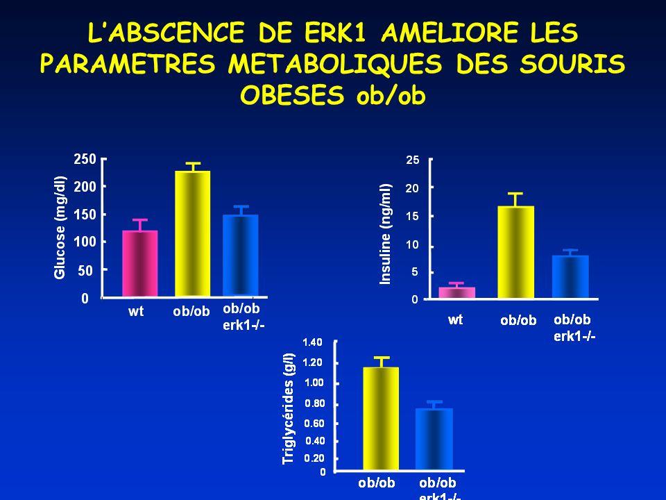L'ABSCENCE DE ERK1 AMELIORE LES PARAMETRES METABOLIQUES DES SOURIS OBESES ob/ob