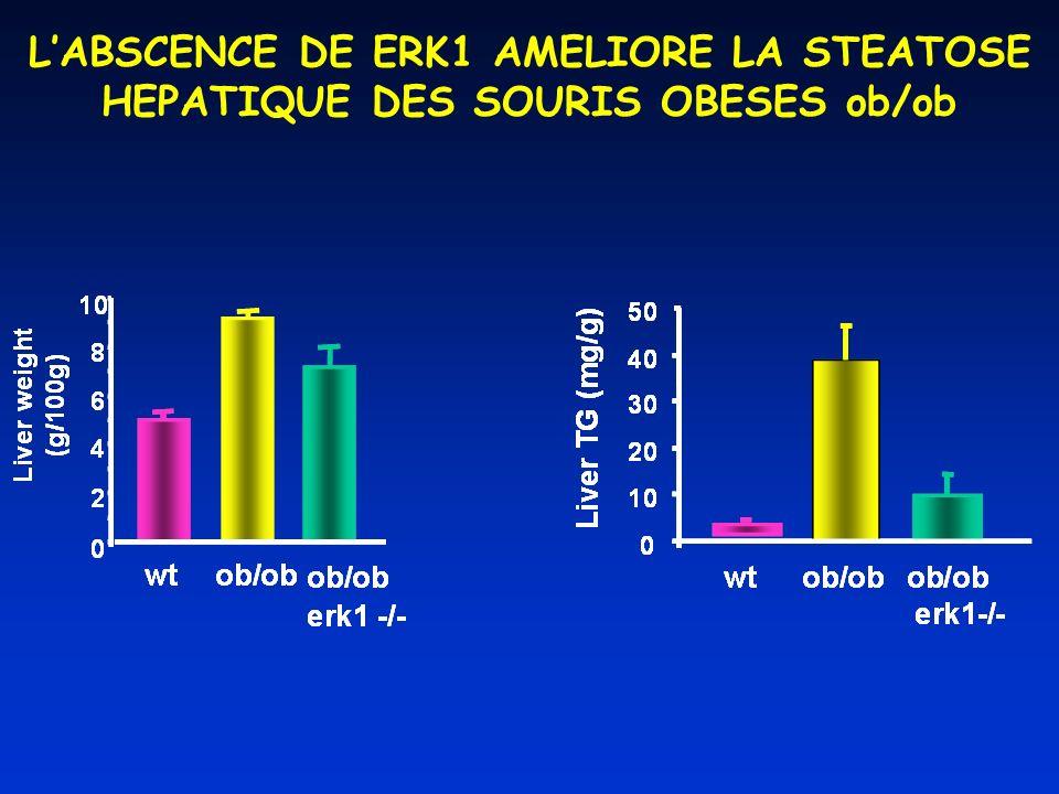 L'ABSCENCE DE ERK1 AMELIORE LA STEATOSE