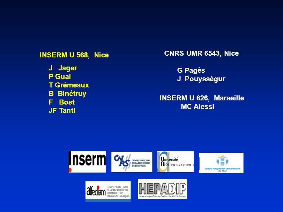 CNRS UMR 6543, Nice INSERM U 568, Nice. J Jager. P Gual. T Grémeaux. B Binétruy. F Bost.