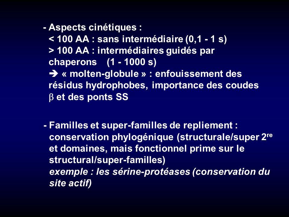 - Aspects cinétiques : < 100 AA : sans intermédiaire (0,1 - 1 s) > 100 AA : intermédiaires guidés par chaperons (1 - 1000 s)