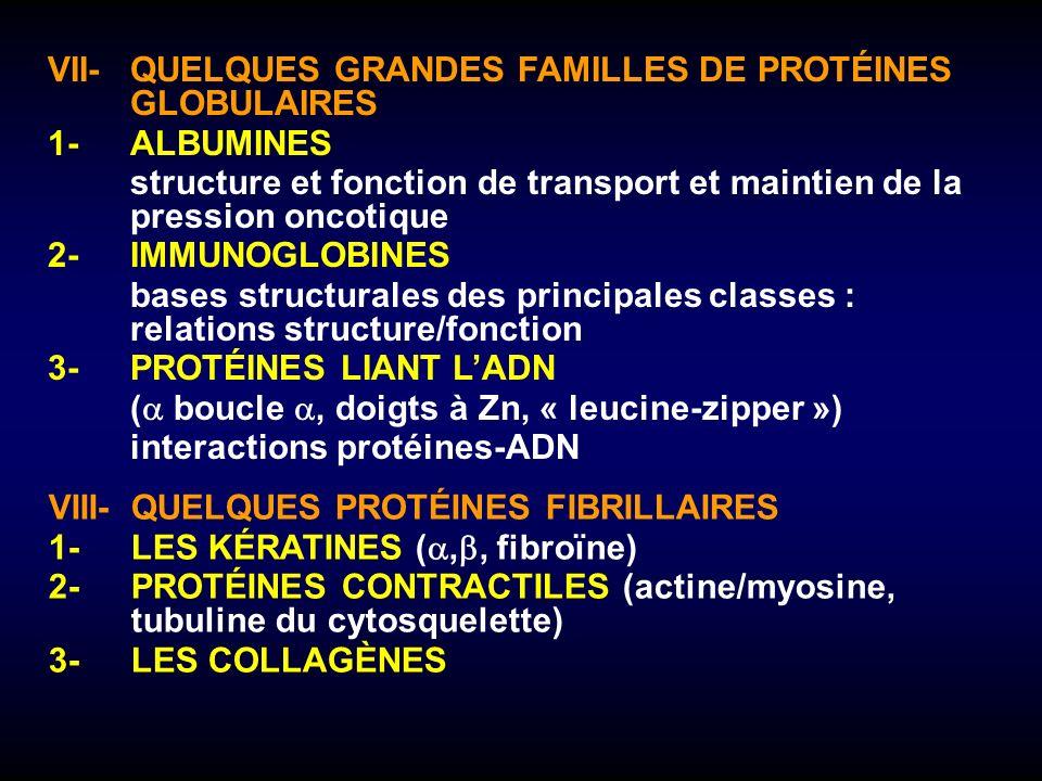 VII- QUELQUES GRANDES FAMILLES DE PROTÉINES GLOBULAIRES