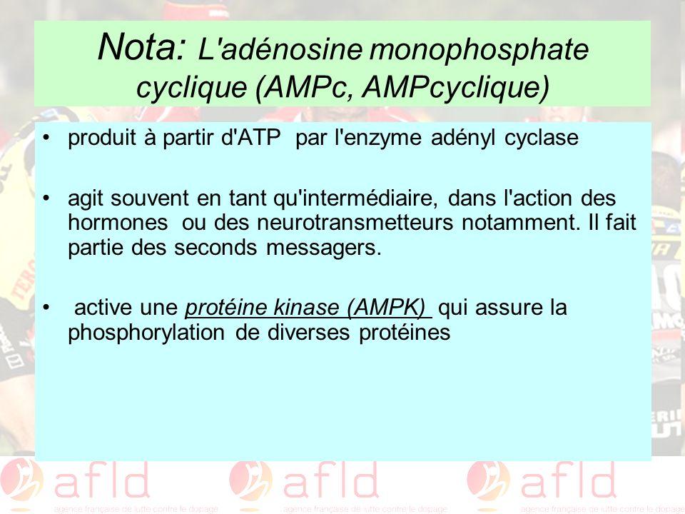 Nota: L adénosine monophosphate cyclique (AMPc, AMPcyclique)