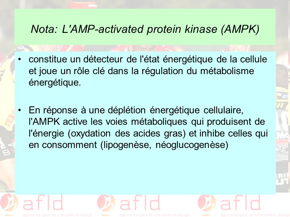 Nota: L AMP-activated protein kinase (AMPK)