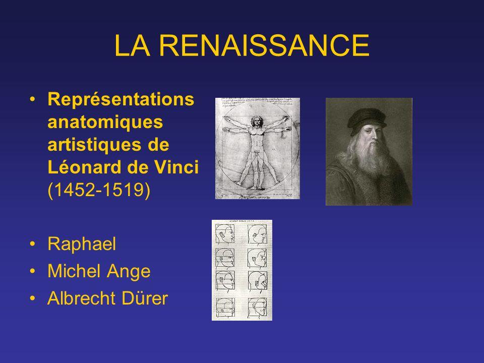 LA RENAISSANCE Représentations anatomiques artistiques de Léonard de Vinci (1452-1519) Raphael. Michel Ange.