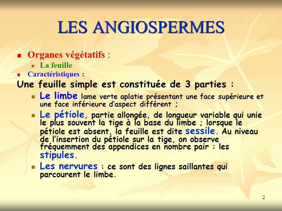 LES ANGIOSPERMES Organes végétatifs :
