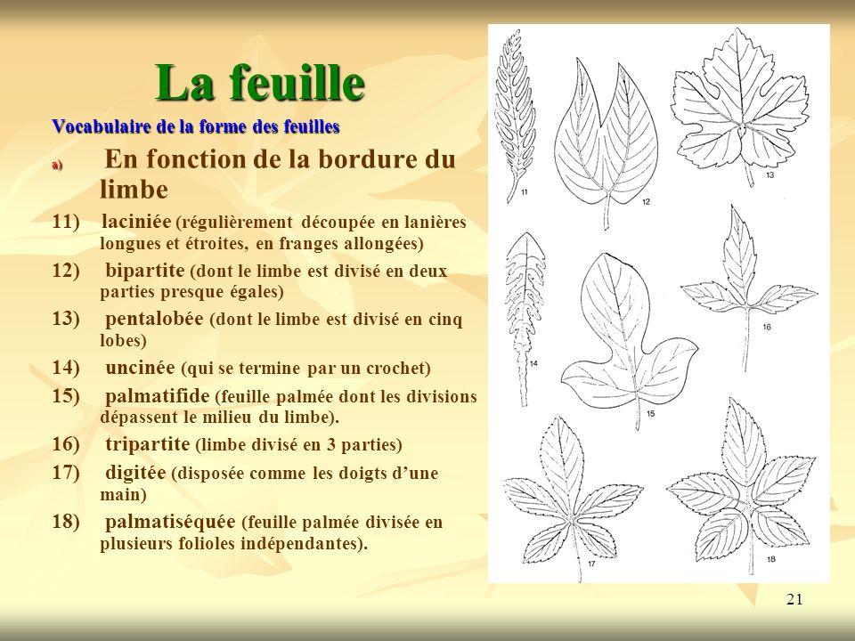 La feuilleVocabulaire de la forme des feuilles. En fonction de la bordure du limbe.