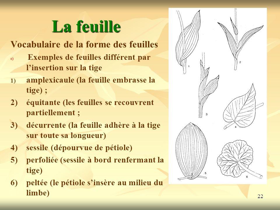 La feuille Vocabulaire de la forme des feuilles