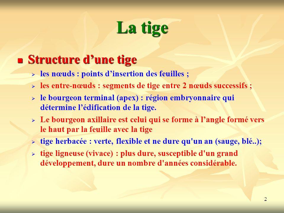 La tige Structure d'une tige