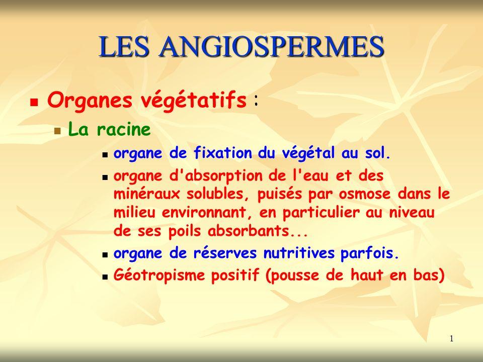 LES ANGIOSPERMES Organes végétatifs : La racine