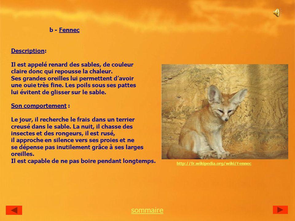 b - Fennec sommaire Description: