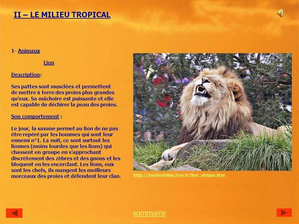 II – LE MILIEU TROPICAL sommaire 1- Animaux Lion Description: