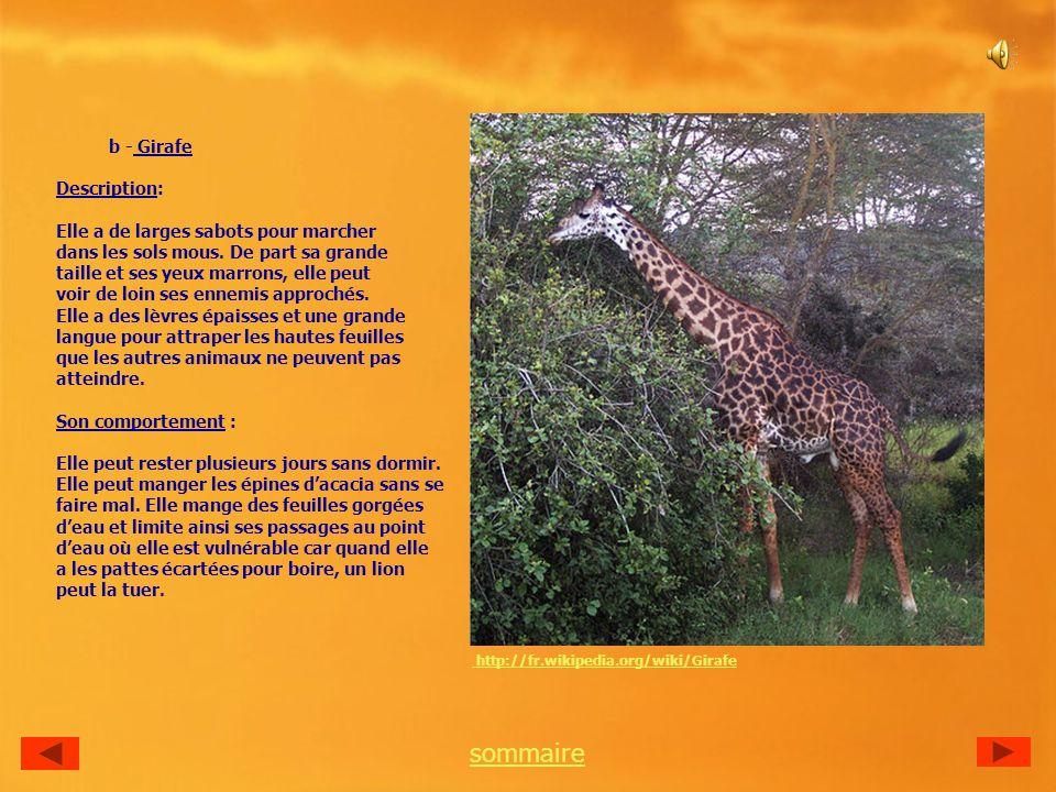 sommaire b - Girafe Description: Elle a de larges sabots pour marcher