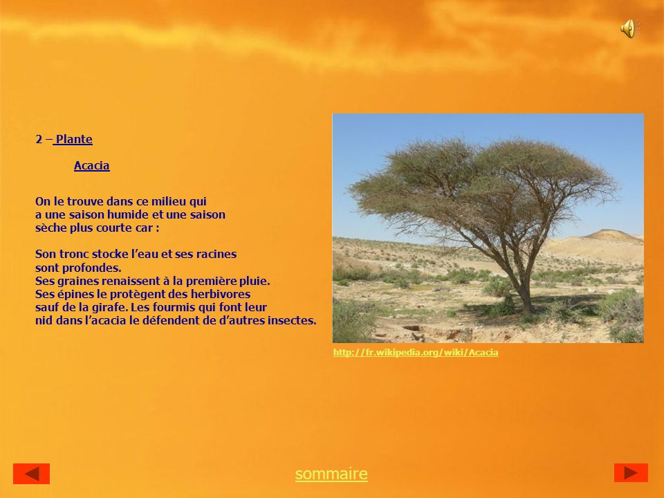 sommaire 2 – Plante Acacia On le trouve dans ce milieu qui