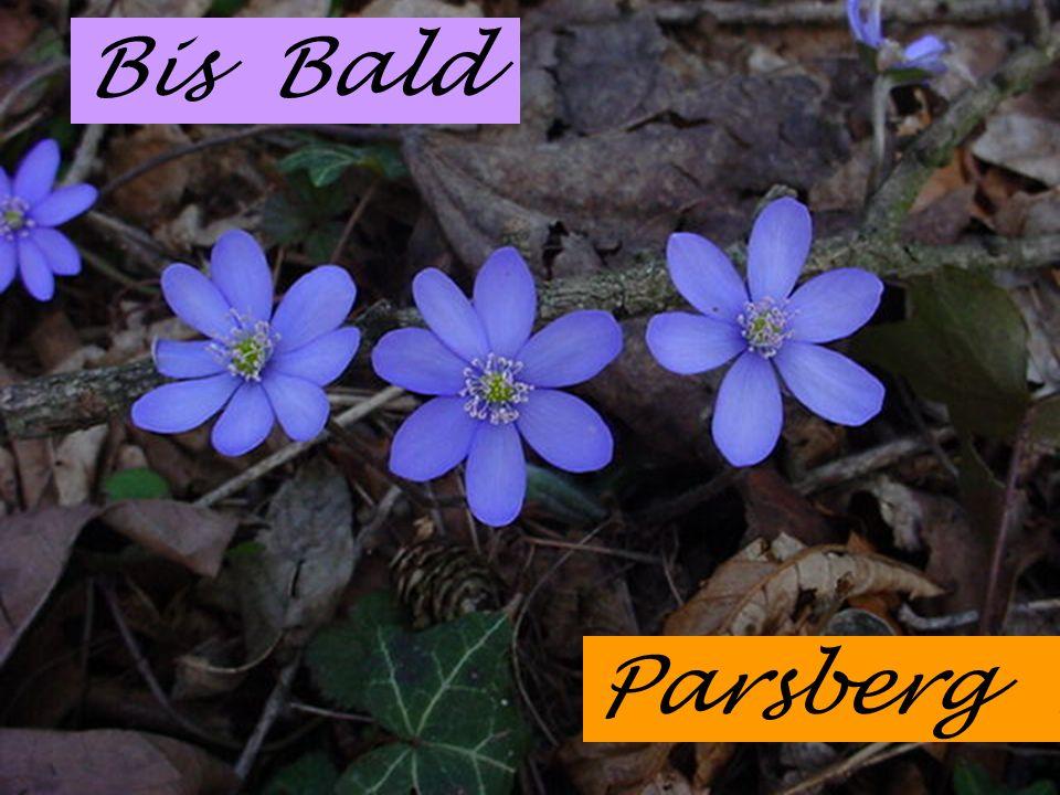 Bis Bald Parsberg !...