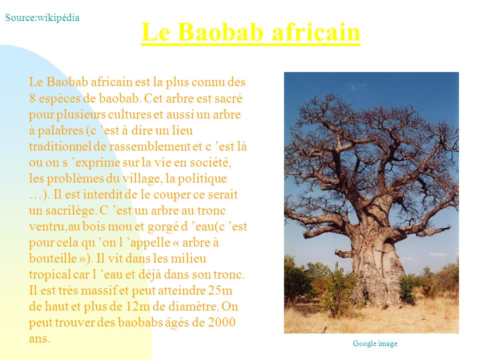 Source:wikipédia Le Baobab africain.