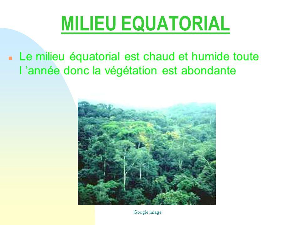 Candice Couchaud 26/03/2017. MILIEU EQUATORIAL. Le milieu équatorial est chaud et humide toute l 'année donc la végétation est abondante.