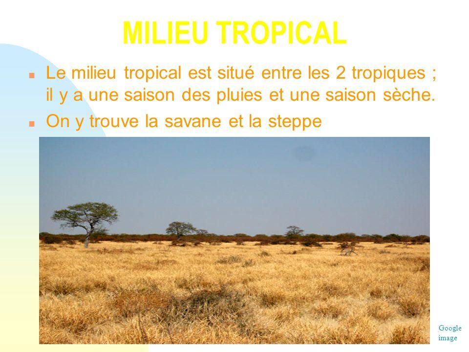 MILIEU TROPICAL Le milieu tropical est situé entre les 2 tropiques ; il y a une saison des pluies et une saison sèche.