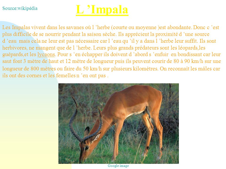 L 'Impala Source:wikipédia.