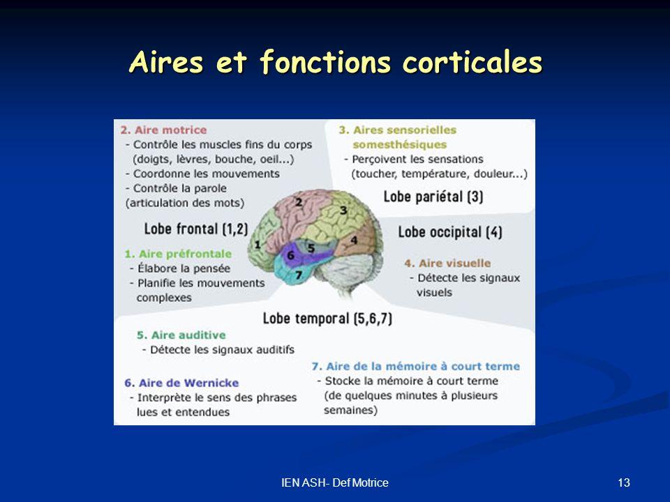 Aires et fonctions corticales
