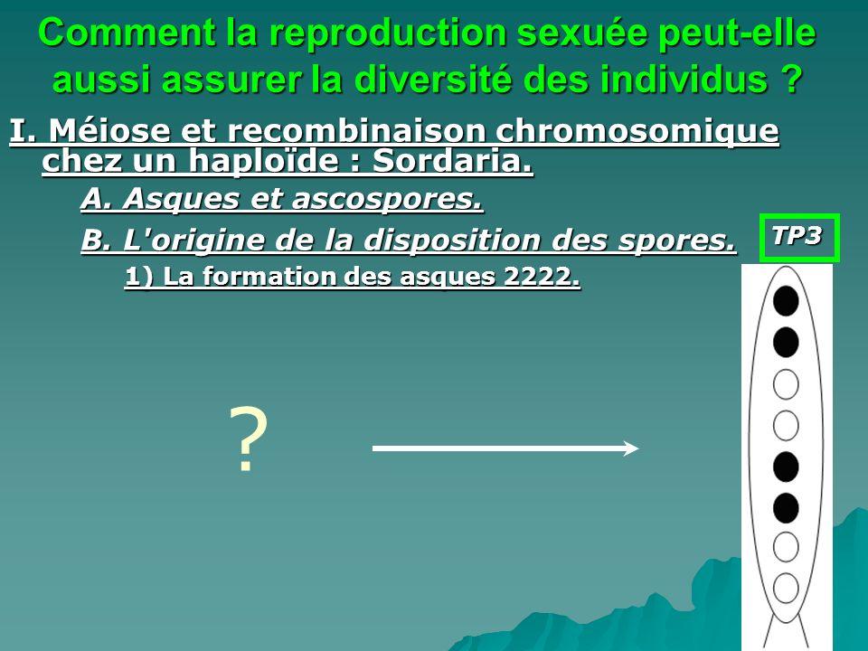 Comment la reproduction sexuée peut-elle aussi assurer la diversité des individus