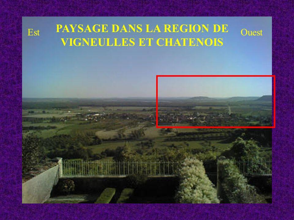 PAYSAGE DANS LA REGION DE VIGNEULLES ET CHATENOIS