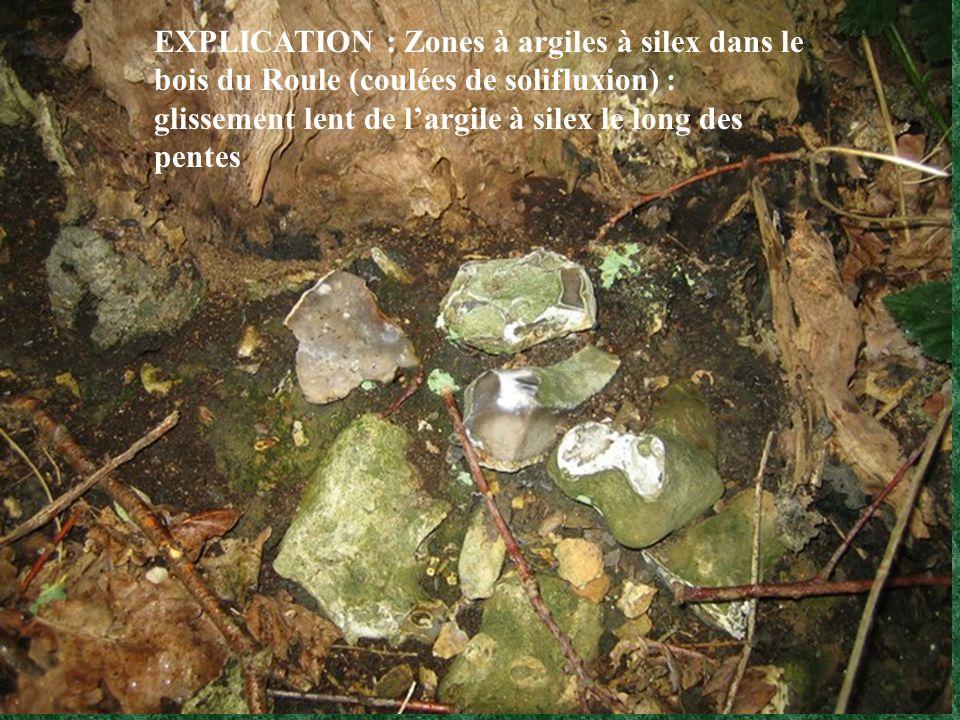 EXPLICATION : Zones à argiles à silex dans le bois du Roule (coulées de solifluxion) : glissement lent de l'argile à silex le long des pentes