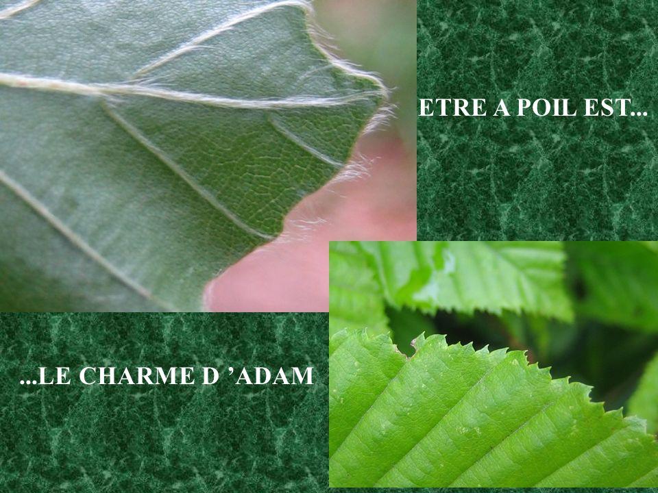 ETRE A POIL EST... ...LE CHARME D 'ADAM