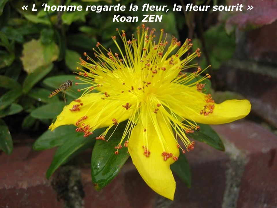 « L 'homme regarde la fleur, la fleur sourit » Koan ZEN