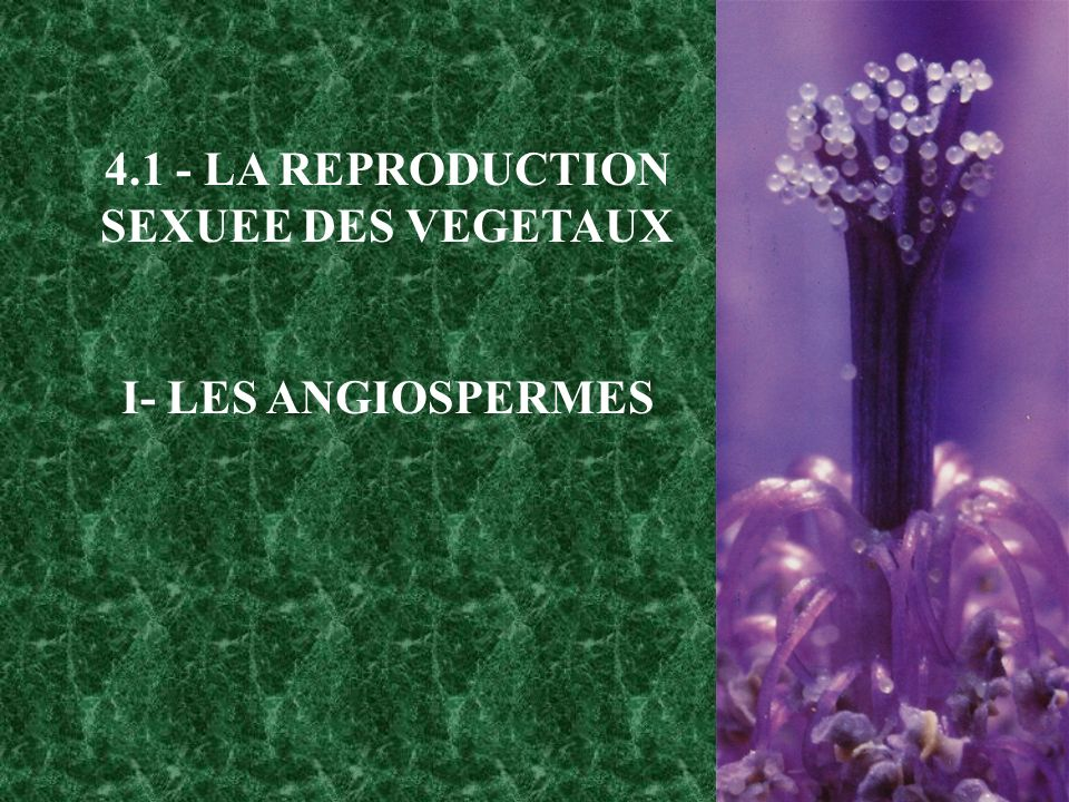 4.1 - LA REPRODUCTION SEXUEE DES VEGETAUX