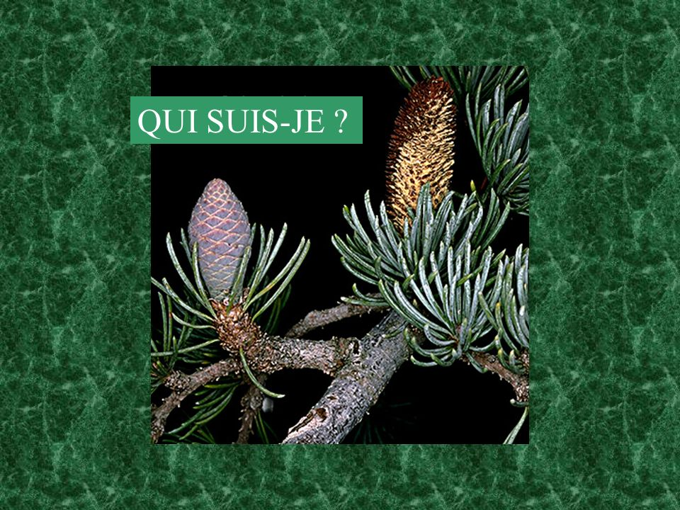 QUI SUIS-JE