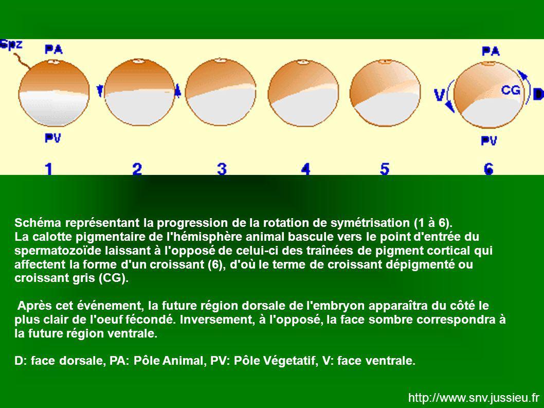 Schéma représentant la progression de la rotation de symétrisation (1 à 6).