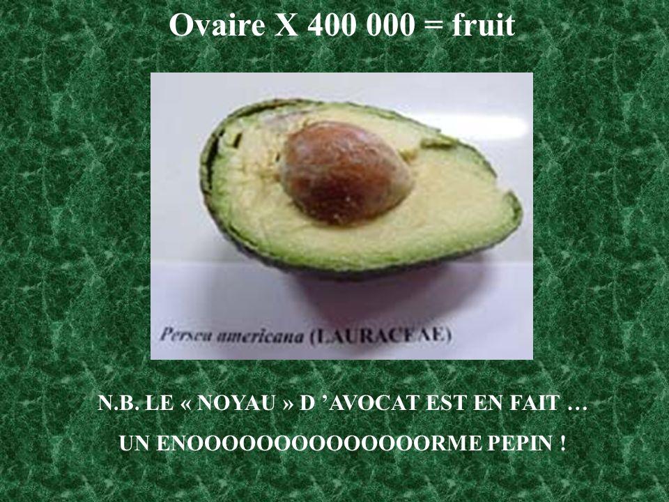 Ovaire X 400 000 = fruit N.B. LE « NOYAU » D 'AVOCAT EST EN FAIT …
