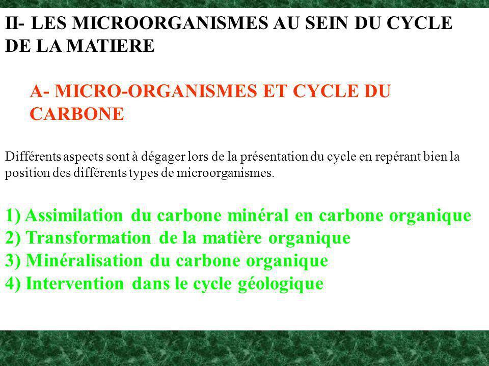 II- LES MICROORGANISMES AU SEIN DU CYCLE DE LA MATIERE