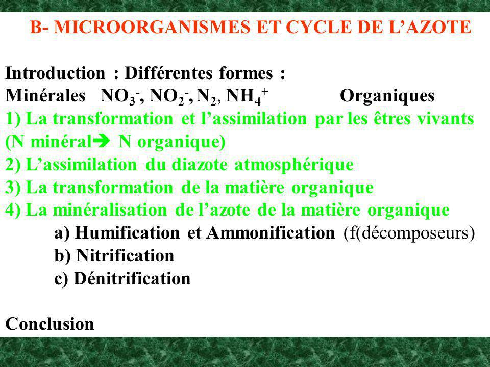 B- MICROORGANISMES ET CYCLE DE L'AZOTE