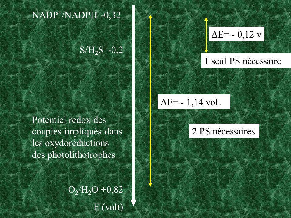 NADP+/NADPH -0,32 S/H2S -0,2. Potentiel redox des couples impliqués dans les oxydoréductions des photolithotrophes.