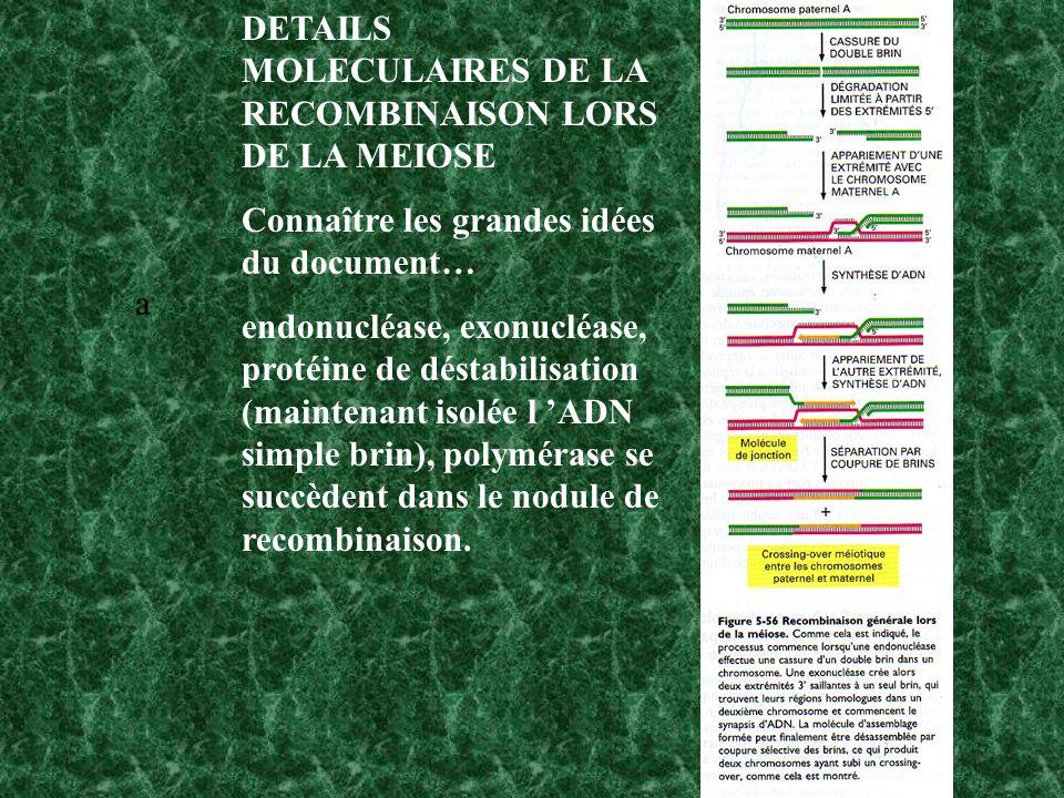 DETAILS MOLECULAIRES DE LA RECOMBINAISON LORS DE LA MEIOSE