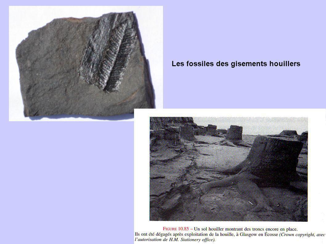 Les fossiles des gisements houillers