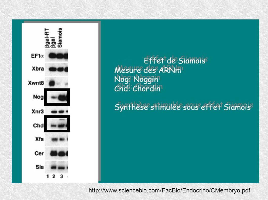 http://www.sciencebio.com/FacBio/Endocrino/CMembryo.pdf