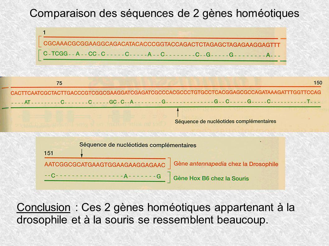 Comparaison des séquences de 2 gènes homéotiques