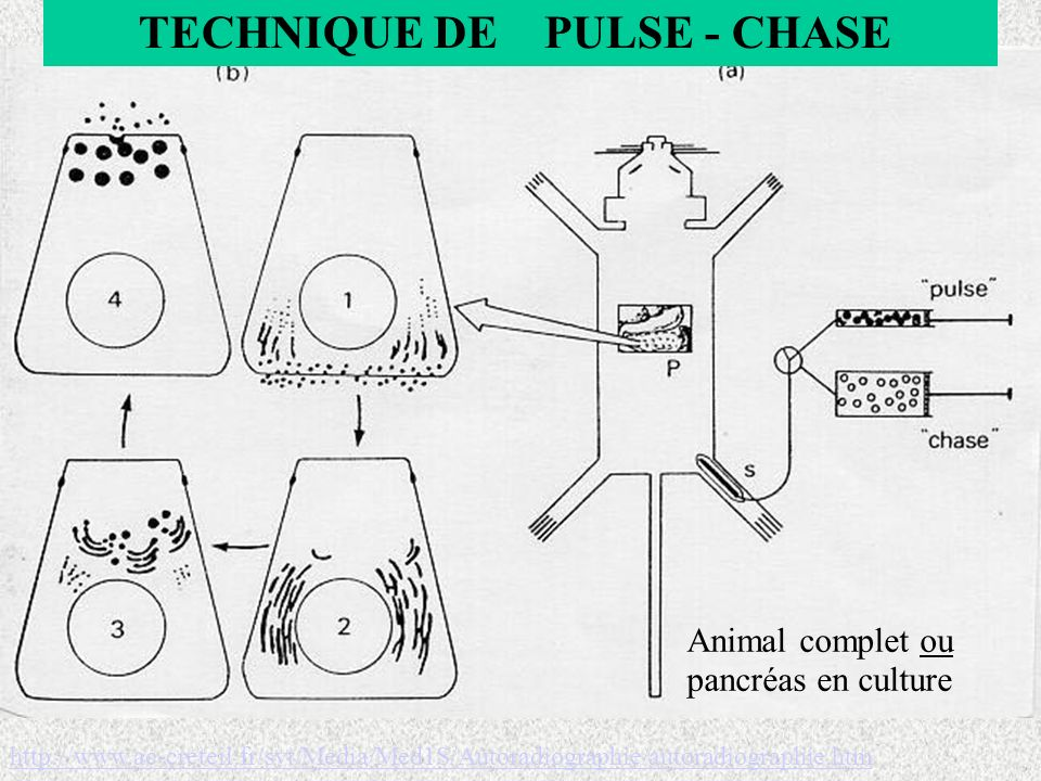 TECHNIQUE DE PULSE - CHASE