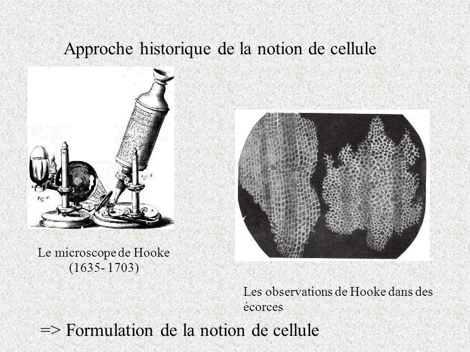 Le microscope de Hooke (1635- 1703)