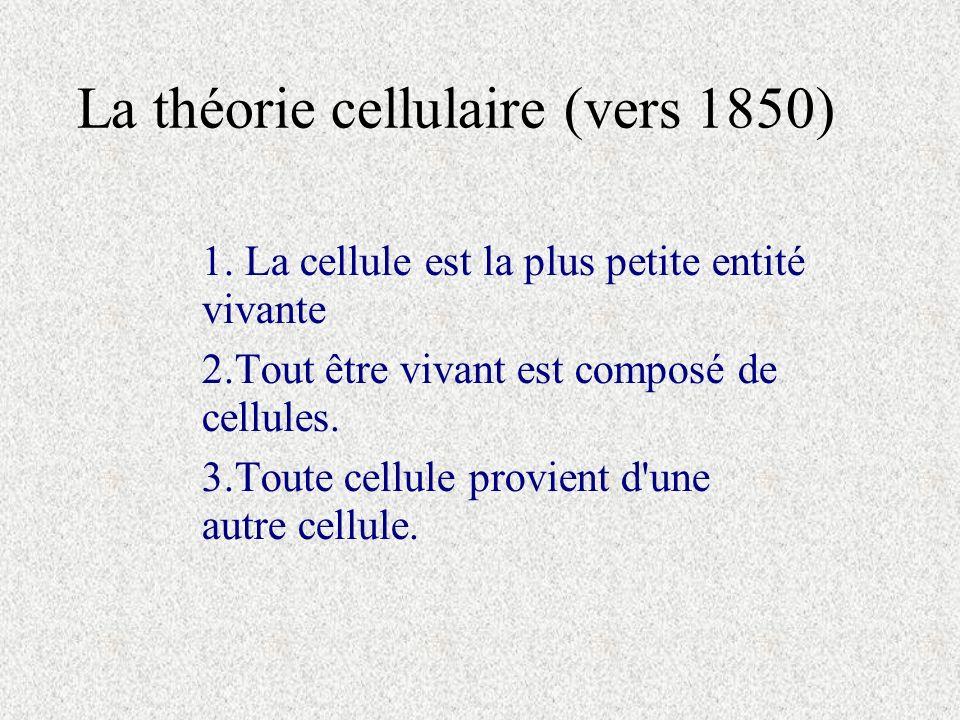 La théorie cellulaire (vers 1850)