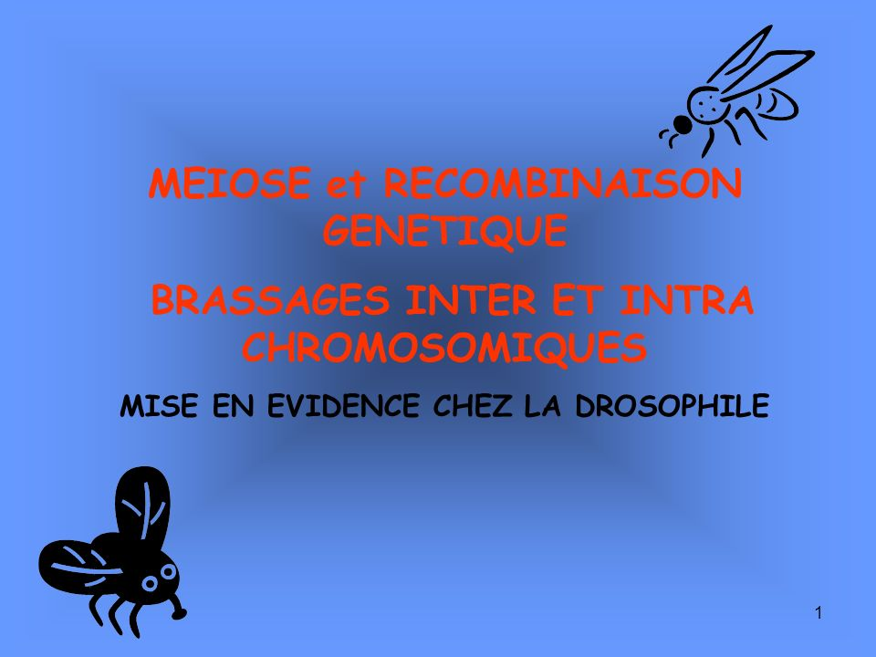 MEIOSE et RECOMBINAISON GENETIQUE
