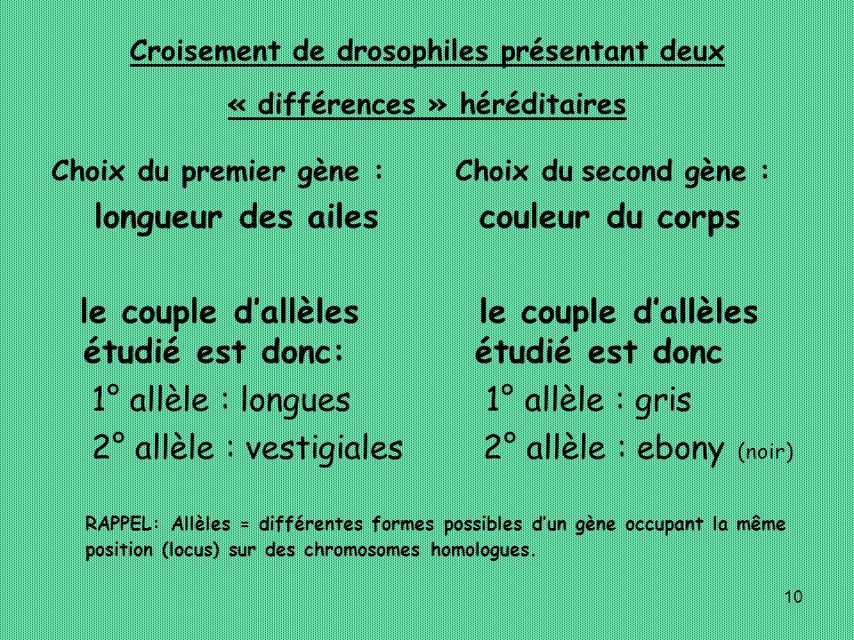 Croisement de drosophiles présentant deux « différences » héréditaires